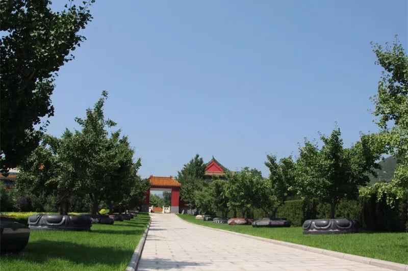 北京哪里有免费的树葬  选树葬也需要看风水吗