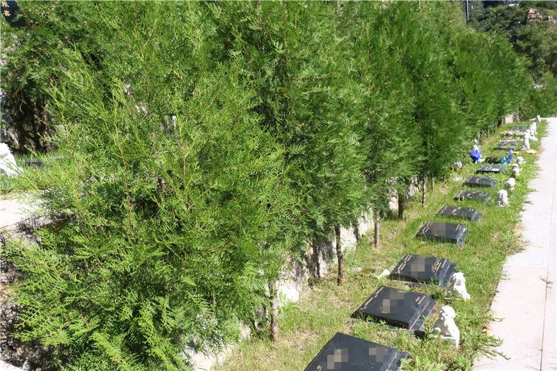 北京九公山树葬公墓环境怎么样?规划的如何?