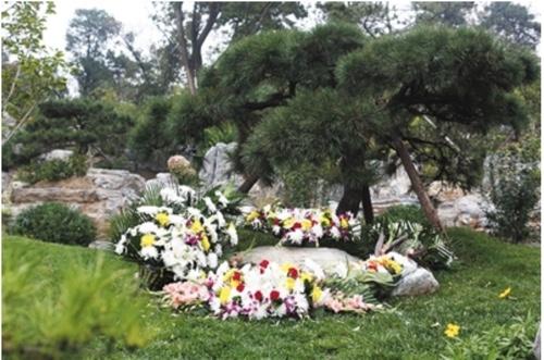 北京市树葬地点都有哪些?分别拥有什么特色?